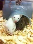 The Three Mice w/ 20/20 vision